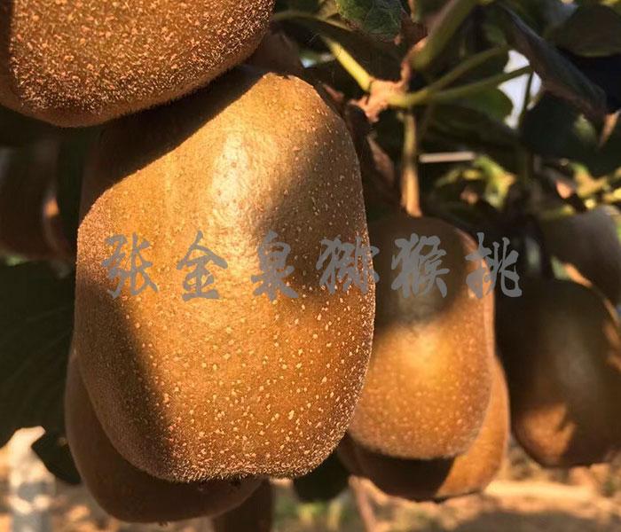 博山猕猴桃品种